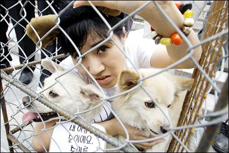 Koreans Eat Dog Many Koreans Eat Dog
