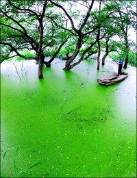 Upo Wetland, Rich Habitat for Wild Life