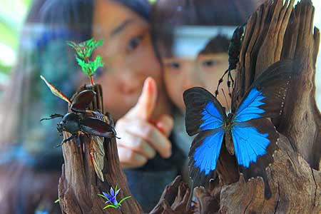 fluturi coreeni Spring_2012_450