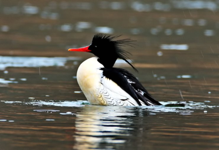 Courtesy of Robin Newlin / Birds Korea