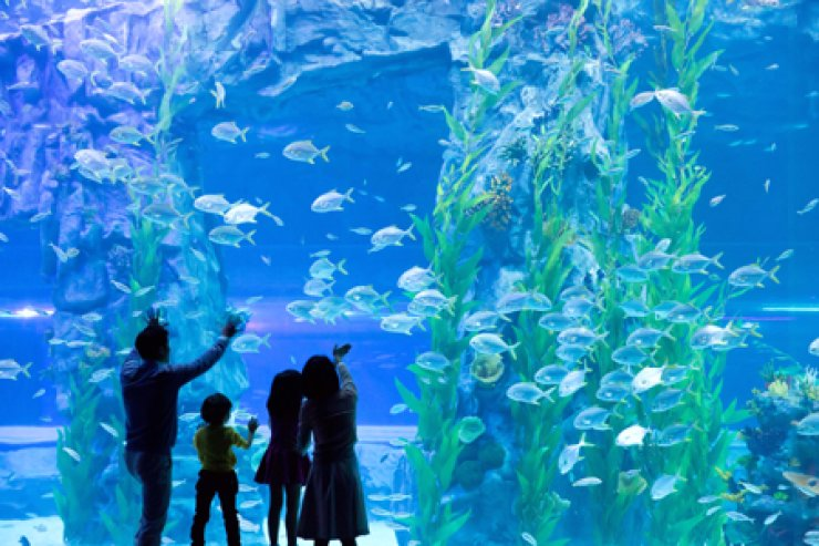 Visitors look at the main tank at newly opened Lotte World Aquarium in southern Seoul. The 25-meter-wide tank is Korea's largest, and houses 10,000 marine creatures. / Courtesy of Lotte World Aquarium