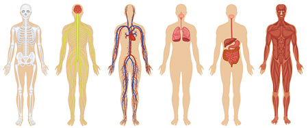 7 Biggest Mysteries Of Human Body