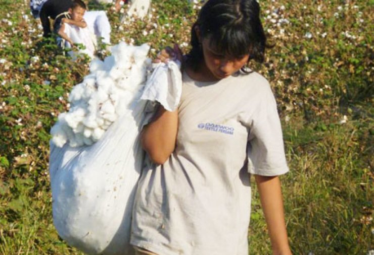 Even though Uzbekistan has reduced the amount of child labor used during its annual cotton harvest, activists say it continues to force adults and older children into the fields. The Korean government uses Uzbek cotton to make banknotes. / Courtesy of Cotton Campaign