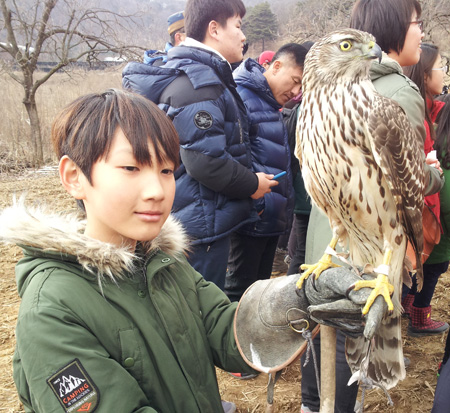Master falconer Park Yong-soon displays a golden eagle during a rare falconry demonstration on Feb. 7. / Courtesy of Robert Neff
