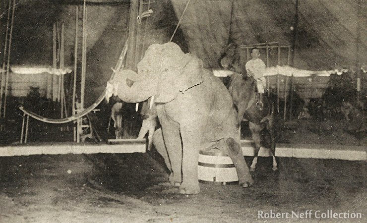Elephants and horses. The Royal Italian Circus in Seoul, June 23, 1920.