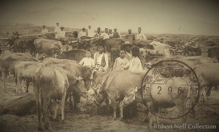 A cattle market, circa 1900s. Robert Neff Collection