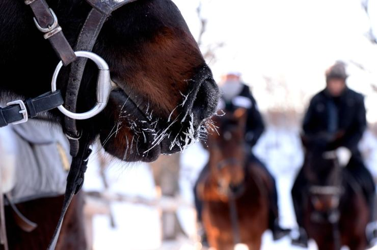 At a horse ranch on top of Daegwallyeong on Mt. Sorak, horses and trainers weather temperatures as low as minus 20 degrees Celsius. / Korea Times file