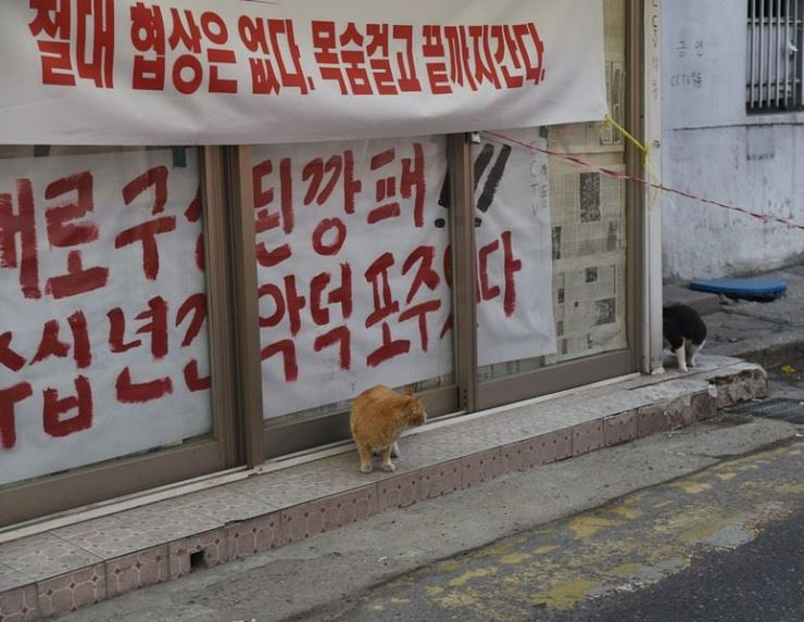 Two cats glance at each other in front of a protest sign in Cheongnyangni 588, a former red-light district in northeastern Seoul. According to a security guard, 40 cats lived here post-eviction. / Courtesy of Ron Bandun