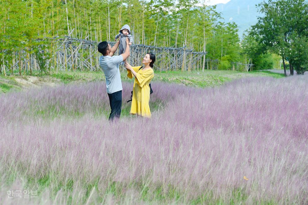 Tourists move through a colony of a Pink Muhly Grass garden in Jangseong County, South Jeolla Province, Oct. 25. / Courtesy of Jangseong County Office