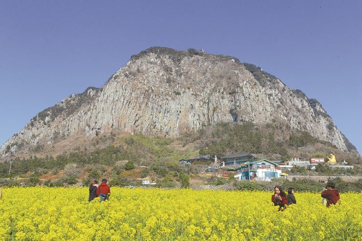 Visitors walk through a field of rape blossoms on southern resort island of Jeju, Wednesday. Yonhap