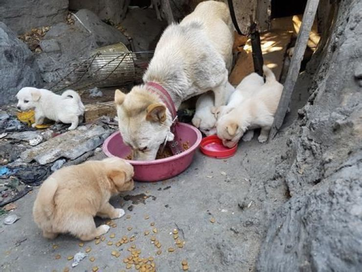 A family of stray dogs at an abandoned home in Nowon-gu, northeastern Seoul / Courtesy of KARA