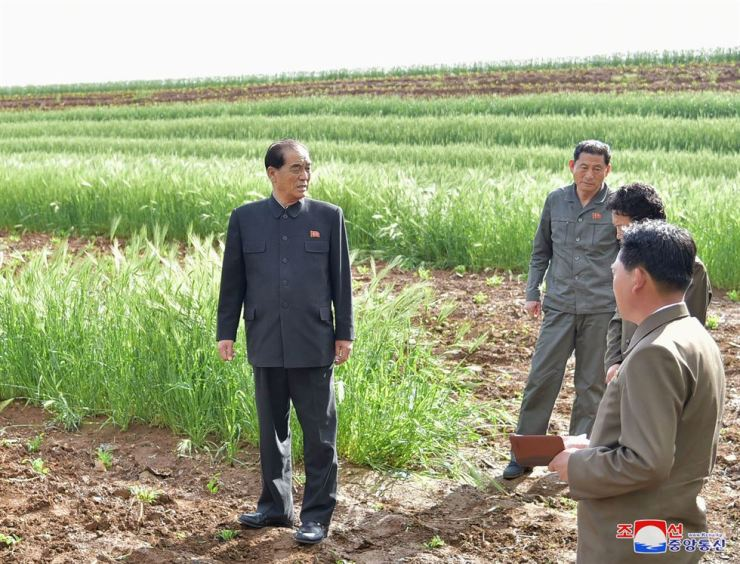 North Korea's Premier of the Cabinet Pak Pong-ju, left, visited Changyon and Sinchon Counties in South Hwanghae Province to check agricultural produces there, according to Korean Central News Agency, May 23, 2018. Yonhap