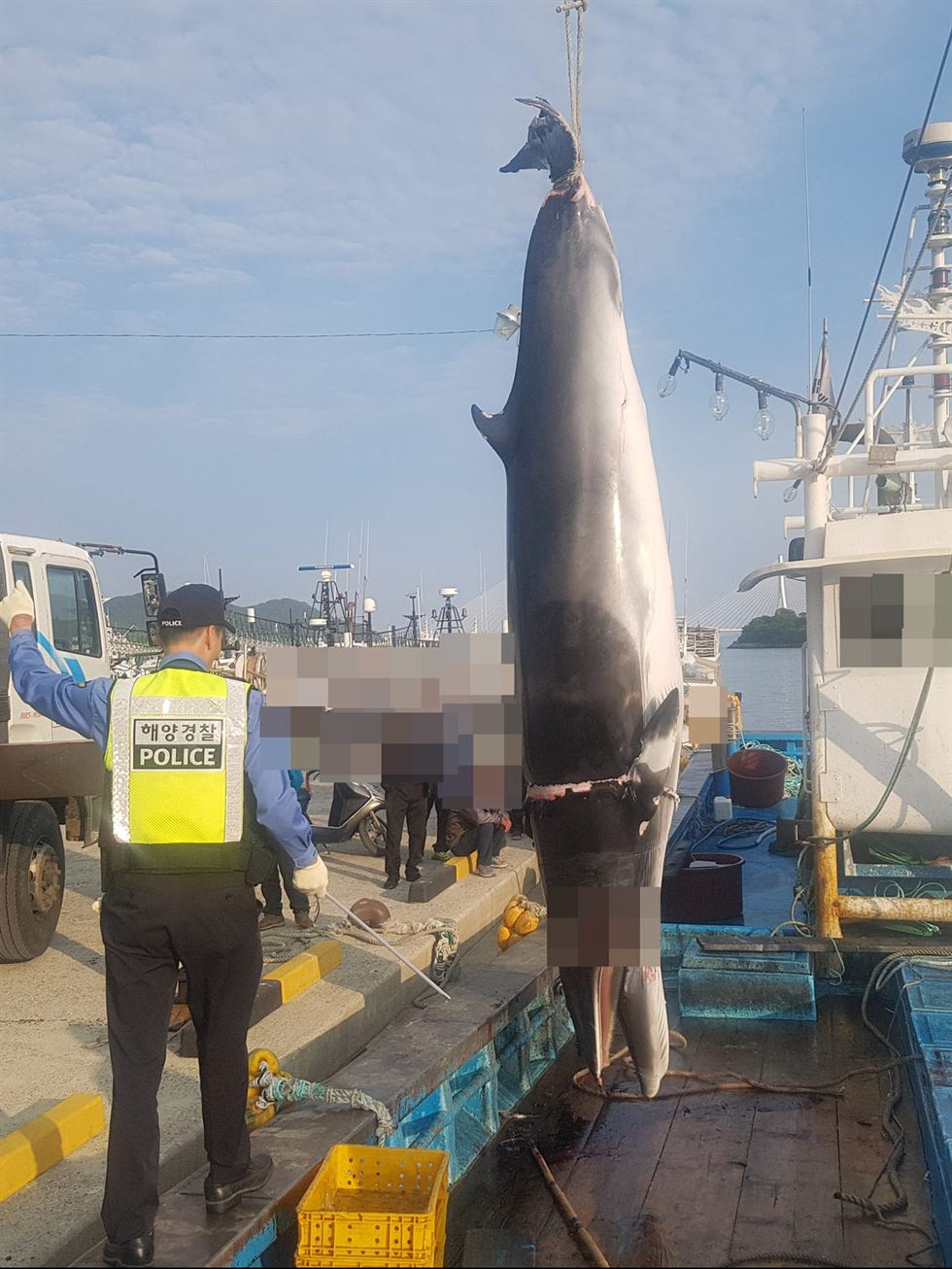 A dead minke whale is lifted from a fishing boat at Dolsan Port in Yeosu, Wednesday. Courtesy of Korea Coast Guard