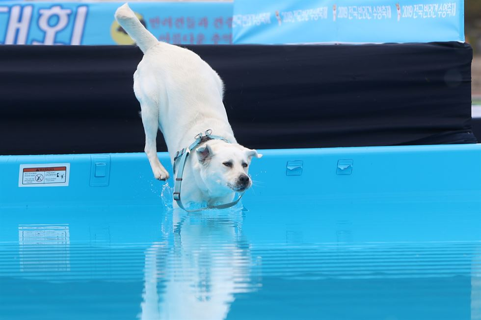 Competitors in a canine swimming competition at Chosun University in Gwangju, Saturday. Yonhap