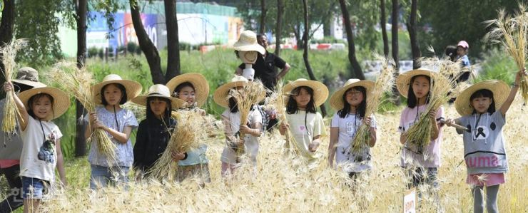 Children hold sheaves of barley during a traditional grain harvesting experience near Yangjae Stream in southern Seoul, Wednesday. Participants cut and threshed barley, and ate rice balls made with boiled barley as part of the event. Korea Times photo by Hong Yoon-ki