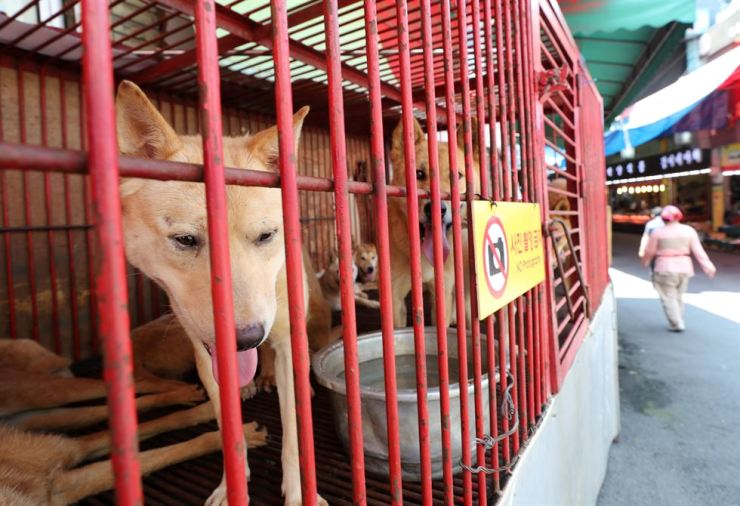 In this July 16, 2018, file photo, dogs are kept in cages at the Gupo Livestock Market in northern Busan. Yonhap