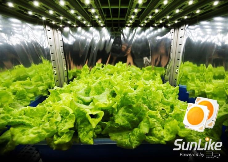 Lettuce is grown under Seoul Semiconductor's SunLike Series natural spectrum LEDs in this photo provided by the company, Tuesday. / Courtesy of Seoul Semiconductor