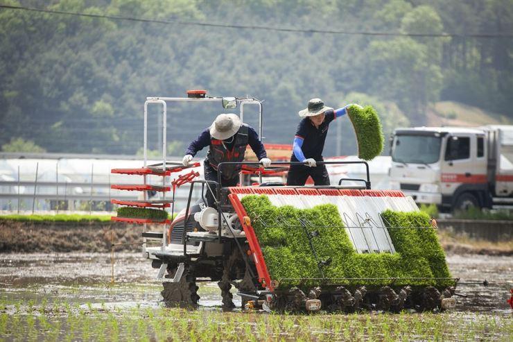 Farmers plant rice using SK Telecom's autonomous rice-planting machine. / Courtesy of SK Telecom