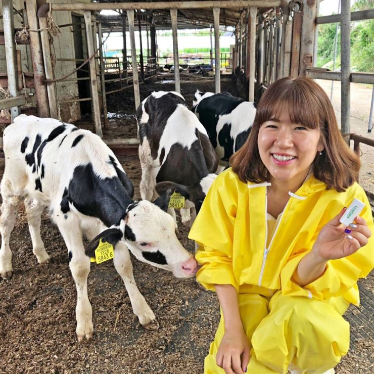 Kim Hee-jin, CEO of uLikeKorea, holds the LiveCare bio-capsule developed by her company at a dairy cow farm in this photo provided by the company on July 19. / Courtesy of uLikeKorea