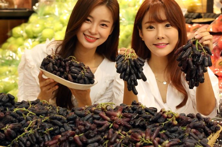 Models promote Sweet Sapphire grapes at a Lotte Mart branch in Jung-gu, Seoul, Wednesday. Sweet Sapphire is a black seedless grape from the U.S. Lotte Mart began selling the grapes at 9,900 won per 600 grams. Yonhap
