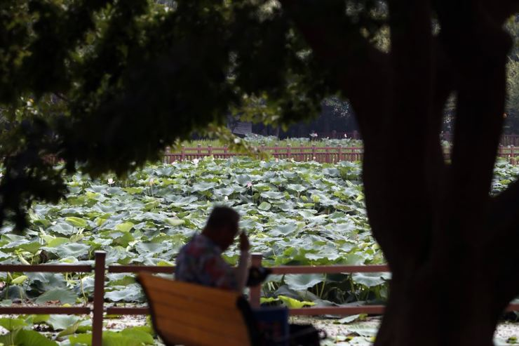 A man rests in the shade of trees at a park in Gwangju, South Jeolla Province, Aug. 7. Yonhap