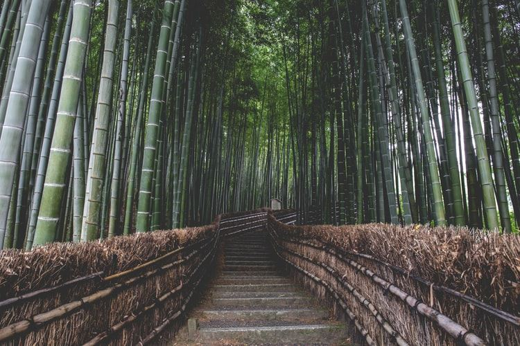 'The bamboo that bends is stronger than the Oak that resists' an ancient proverb that Prime Minister Abe and President Moon may not be familiar with. Unsplash
