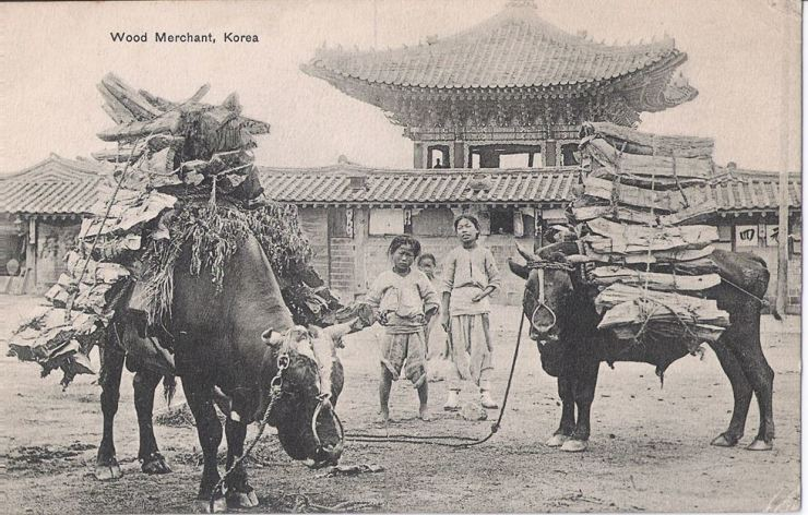 Korean children and oxen with wood, circa 1903. Robert Neff Collection