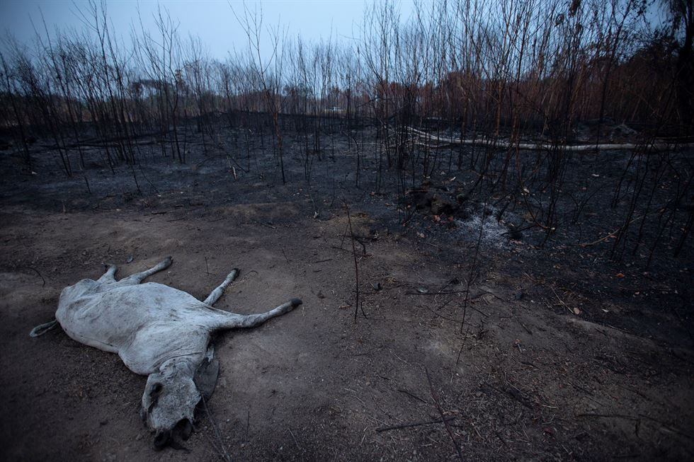 A tract of the Amazon jungle burns as it is cleared by loggers and farmers in Porto Velho, Brazil Aug. 24, 2019. Reuters