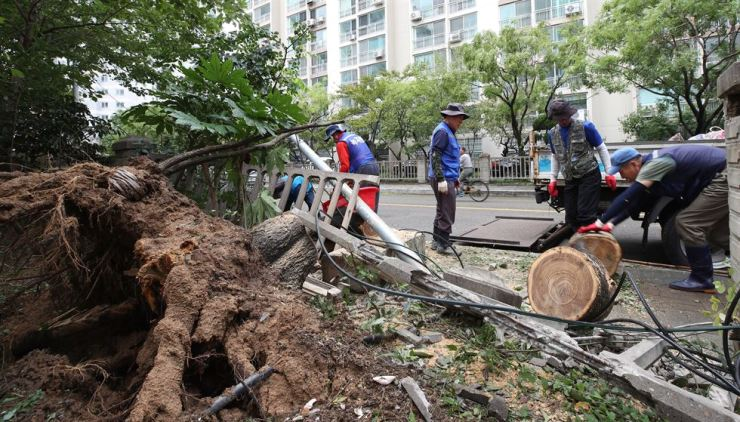 Government officials repair the damage from Typhoon Tapah in Busan, Monday. Yonhap