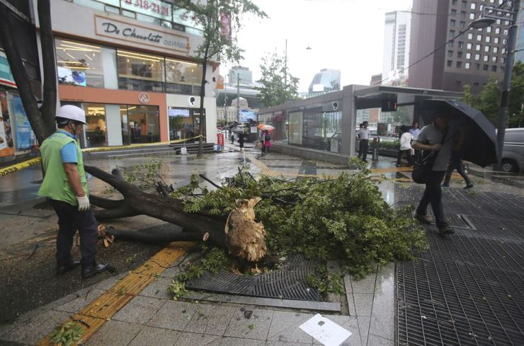A fallen tree caused by Typhoon Lingling lies across a walkway in Seoul, Saturday, Sept. 7, 2019. AP