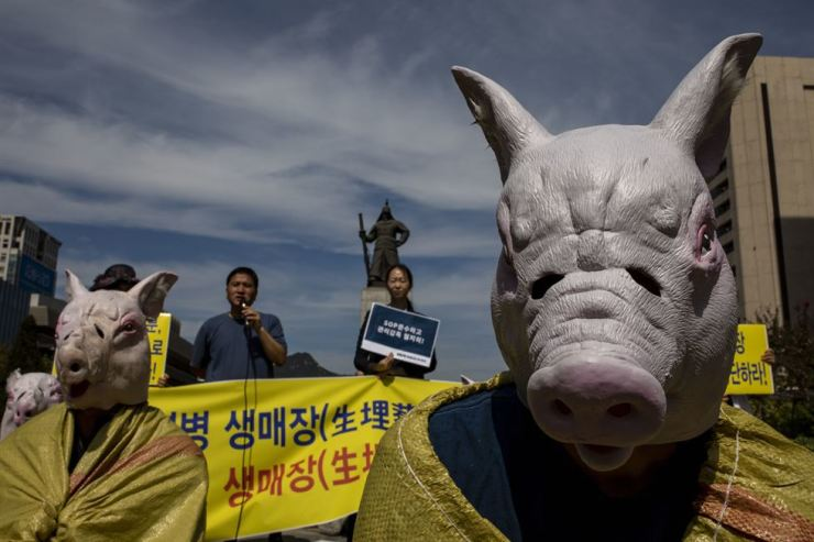 Members of CARE and the Korea Association for Animal Protection wear pig costumes and protest at Gwanghwamun Square on Thursday over the slaughter of animals possibly infected with African swine fever. Korea Times photo by Shim Hyun-chul