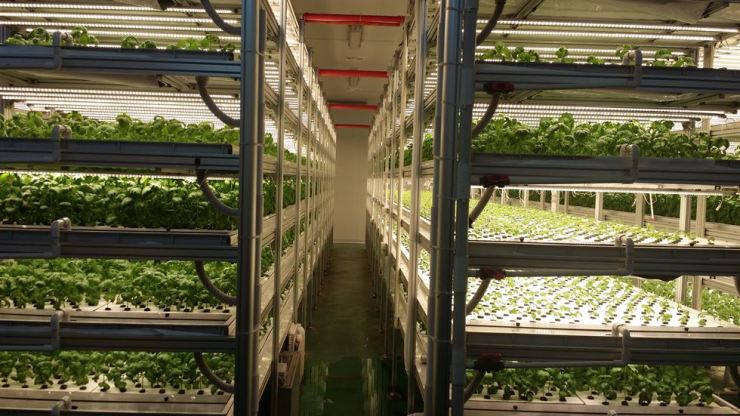 Plants grow at a factory-style smart farm that grows leafy plants and herbs in an automated environment. Korea Times file