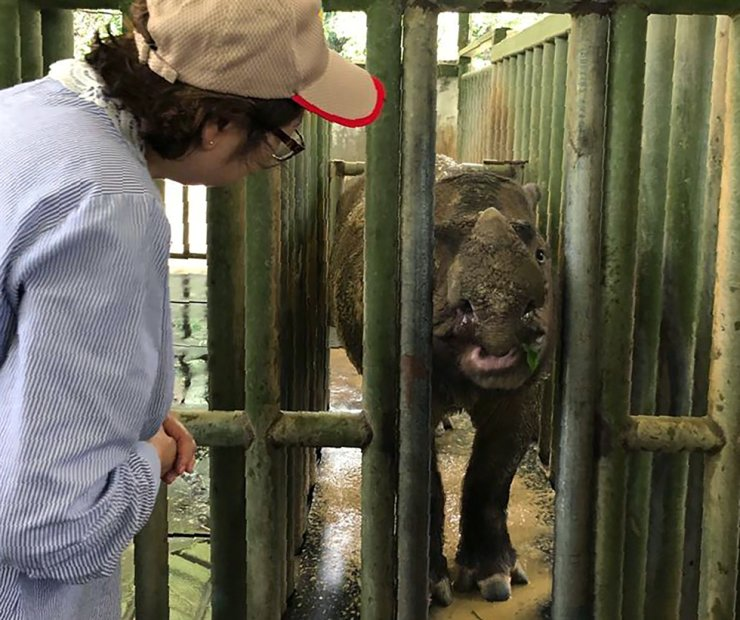 In this Aug. 18, 2019, photo, Sabah Deputy Chief Minister Christina Liew, left, looks at rhino in cage in eastern Sabah state. AP