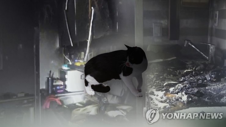 The number of fires caused by pets has increased in recent months. Yonhap