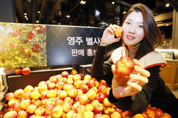 A model promotes Star Apple at Gourmet 494 grocery store in Galleria Department Store in Gangnam-gu, Seoul, Sunday. Harvested only in Yeongju, North Gyeongsang Province, the star-shaped apple is firmer and sweeter than average apples. Courtesy of Galleria Department Store