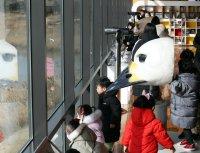Watching migratory birds