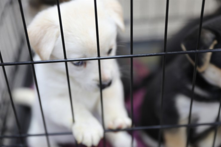 The definition of cruelty will cover a wider range of abuse, with any mistreatment leading to the death of an animal receiving a maximum three-year prison term. Gettyimagesbank