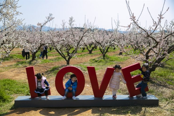 Children enjoy a plum blossom festival hosted last year by Haenam in South Jeolla Province. This year's event was canceled due to the outbreak of the new coronavirus. / Courtesy of Haenam County Office