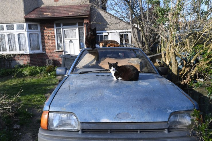 Three cats sit on an abandoned car in London, Britain, March 26. EPA