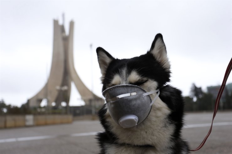 A dog wears a face mask while being walked by its owner near the landmark martyrs monument after orders of home confinement to prevent the spread of coronavirus, in Algiers, Algeria, Tuesday, March 24, 2020. AP