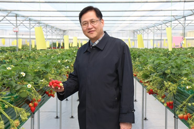 Seoul Agricultural Technology Center Director Cho Sang-tae poses in the center's strawberry garden. The center will offer therapeutic gardening programs that would help those suffering depression brought on by COVID-19. / Korea Times photo by Kim Se-jeong