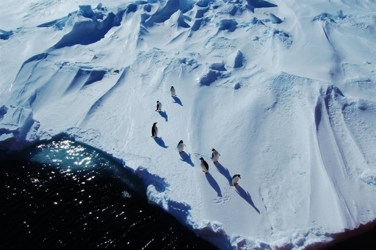 Penguins are seen in ice-covered Antarctica from the Russian scientific research vessel Akademik Fedorov (not seen in this photo) in this January 2008 file photo. Before South Korea has its own icebreaker, scientists of the Korea Polar Research Institute (KOPRI) relied on foreign ships to do their research. / Courtesy of KOPRI