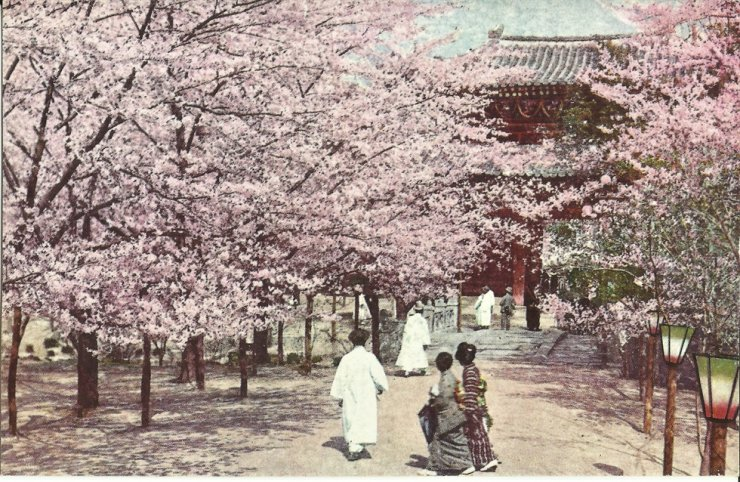 Cherry blossoms on the grounds of the zoo and botanical garden, circa 1920s. Robert Neff Collection