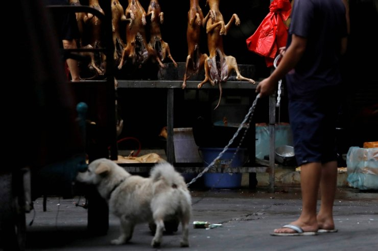 A man walks with his pet dog as he talks to a vendor who sells dog meat at a market during the dog meat festival in Yulin, Guangxi Autonomous Region, China, June 21, 2018. Reuters