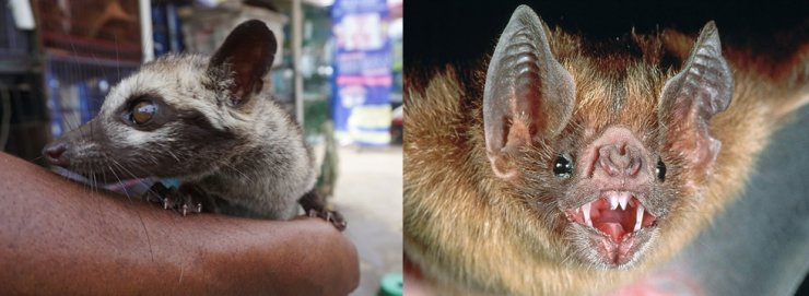The Ministry of Environment banned the import of civets, left, and bats, which are believed to carry high risks of spreading cross-species disease infections to humans in February. Korea Times file