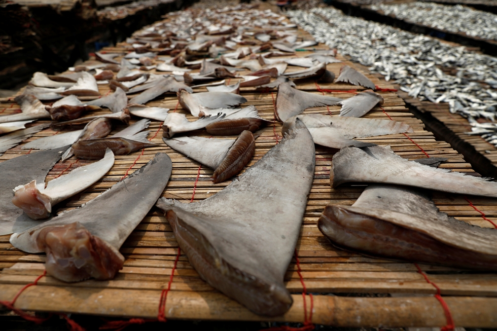 Shark fin dishes at a Chinese restaurant in Seoul. Korea Times file