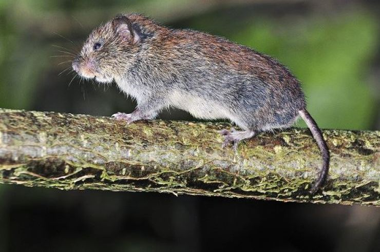 The bubonic plague, known as the 'Black Death' in the Middle Ages, is a highly infectious and often fatal disease that is spread mostly by rodents. Korea Times file