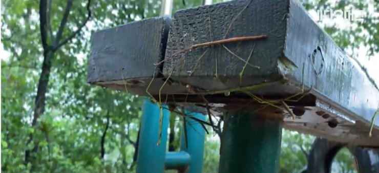 Stick insects on a bench on a mountain in western Seoul/ Courtesy of SBS