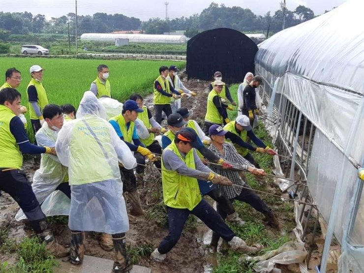 Dozens of NongHyup Bank employees engage in restoration work at a farm damaged by heavy rain fall located in Icheon, Gyeonggi Province, Tuesday. The bank said over 3,000 employees are joining the effort to restore agricultural structures damaged by torrential rain. / Courtesy of NongHyup Bank