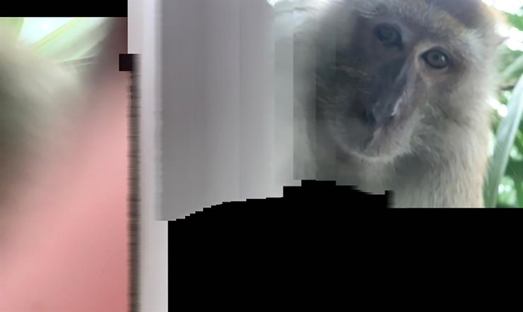 This photo taken with panorama mode but the phone wasn't turned, and provided by Zackrydz Rodzi shows a monkey which took a selfie in Batu Pahat in the southern state of Johor, Malaysia, Sept. 12. / AP
